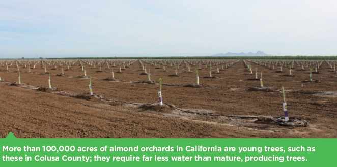 Almond orchard with dozens of very young, staked trees visible. Caption reads: More than 1,000 acres of almond orchards in California are young trees, such as these in Colusa County; they require far less water than mature, producing trees.