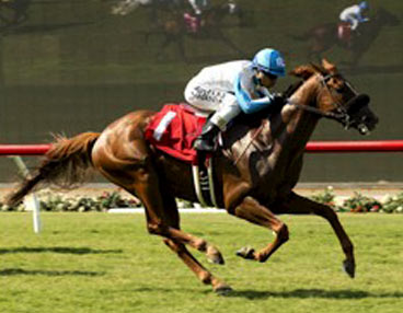 Galloping race horse on grass track with jockey in blue helmet