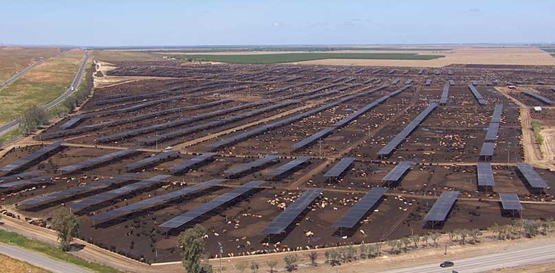 Aerial of Harris Ranch Feed Lot