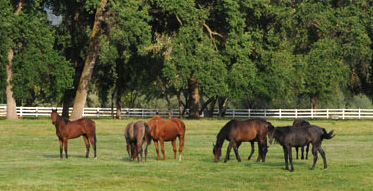 Lush green horse pasture with white fence in background, 6 horses in foreground